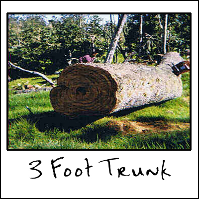 3 Foot Trunk